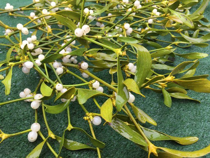 Christmas in Kendal - mistletoe on the market